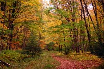 Fall Autumn Foliage Seneca Creek Trail