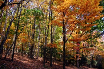 Colorful Fall Trees on Hiking Trail