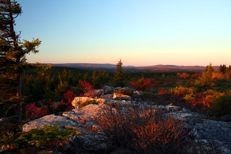Dolly Sods Sunrise Rocks Trees