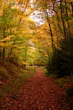 Autumn Evening Hiking Trail