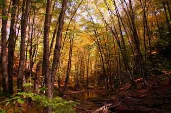 Fall Trees Creek Autumn Trail