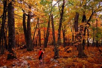 Old Trees Fall Foliage Trail