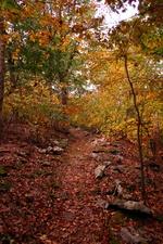 Rocks Path Fall Hiking Trail