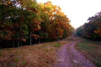 Winding Countryroad Foliage Mountaintop