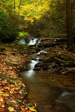 Golden Autumn Creek Waterfalls