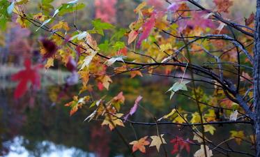 Autumn Tree Leaves Fall Foliage