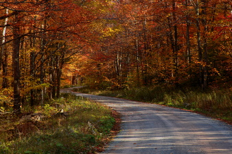 Autumn Trees Country Road