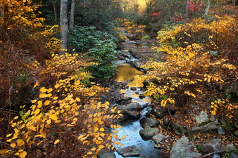 Golden Foliage Forest Creek Sunset