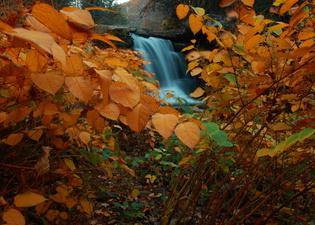 Yellow Foliage Waterfalls