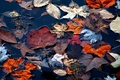 <p>Fallen autumn leaves floating in the water provide a wonderful collage from each colorful leaf in this beautiful picture.</p>