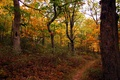 Fall Forest Autumn Hiking Trail Colorful Foliage