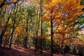 Wonderful and Brilliantly colorful fall foliage in the trees on an Autumn hiking trail.
