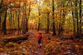 A young hiker marvels at the Bright Fall Colors on this Hiking Trail.
