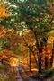 Autumn Country Road Along Mountain