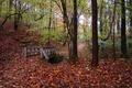 Fallen Autumn Leaves Bridge Park