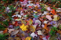 Autumn Leaves on the Forest Floor make a Colorful Collage Arrangement.
