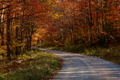 A country road meanders through the forest fall foliage. Each side of the road displays a spectacular show of reds, yellow and orange autumn leaves.