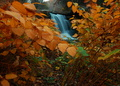 Yellow Foliage Surrounds Waterfalls